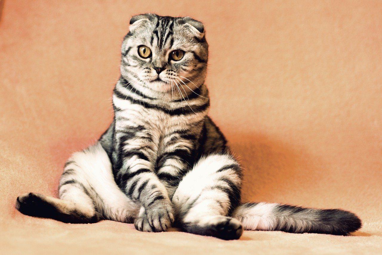 Gatito sin collar antipulgas